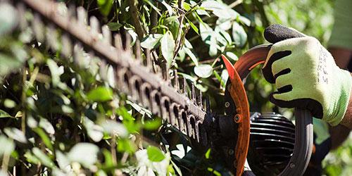 Gartenteam-Kurz Gartenpflege Heckenschnitt